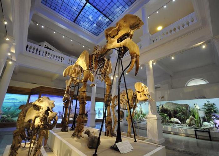 "Muzeul de Istorie Naturala ""Grigore Antipa"""
