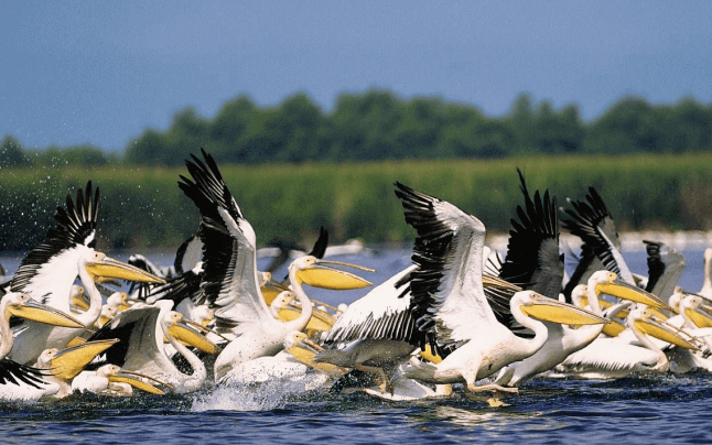 Pasarile din Delta Dunarii