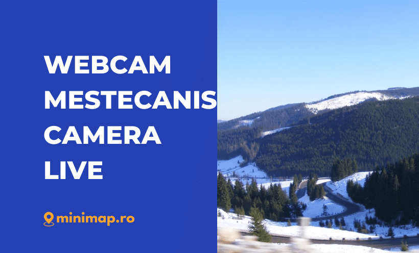 webcam mestecanis live